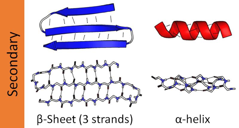 タンパク質の2次構造(αーヘリックスとβシート)